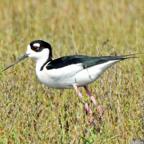 Big Year Birding Image